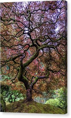 Maple Season Canvas Print - Japanese Maple Tree by Mike Centioli