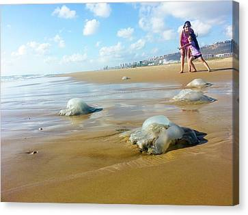 Jellyfish Canvas Print - Jellyfish On The Beach by Photostock-israel