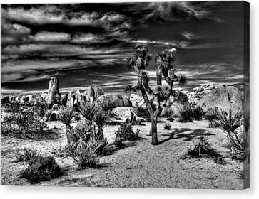 Canvas Print featuring the photograph Joshua Tree Black And White by Benjamin Yeager