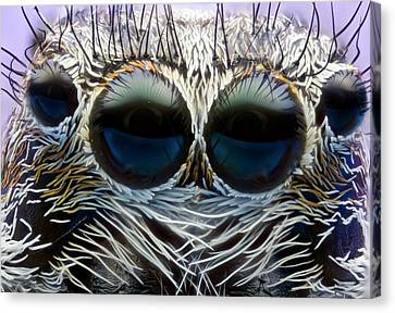 Jumping Spider Head Canvas Print by Nicolas Reusens