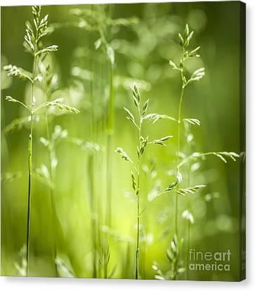 June Green Grass Flowering Canvas Print by Elena Elisseeva