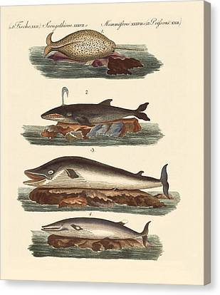 Kinds Of Whales Canvas Print by Splendid Art Prints