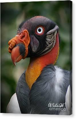 Mayan Mythology Canvas Print - King Vulture by E B Schmidt