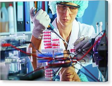 Lab Technician Using A Pipette Canvas Print