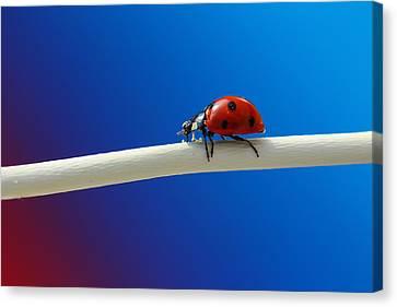 Ladybug Canvas Print by Heike Hultsch