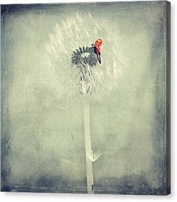 Ladybug With Dandelion Canvas Print by Heike Hultsch