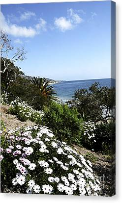Laguna Beach  Canvas Print by Timothy OLeary