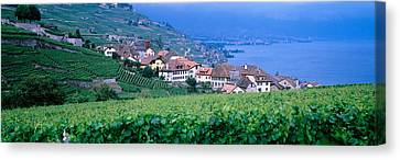 Pastoral Vineyard Canvas Print - Lake Of Geneva, Vineyards, Rivaz by Panoramic Images