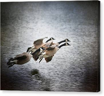 Geese Canvas Print - Last Flight Of The Day by Jai Johnson