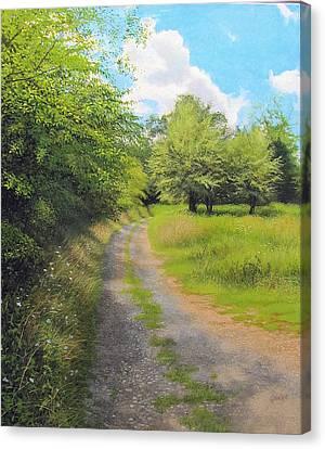 Late Summer Curve Canvas Print by David Bottini