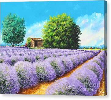 Lavender Lines Canvas Print by Jean-Marc Janiaczyk