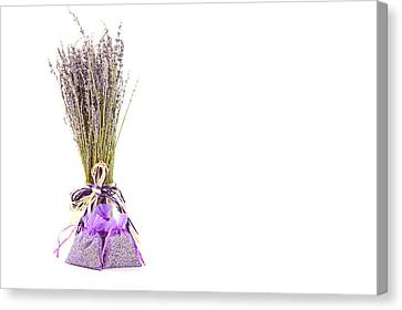 Lavender Canvas Print by Tom Gowanlock