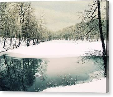 Swans... Canvas Print - Le Reve by Jessica Jenney