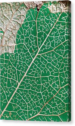 Leaf Skeleton Of Ivy (hedera Helix) Canvas Print