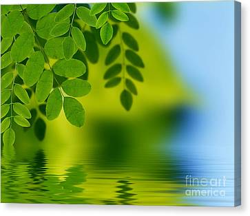 Leaves Reflecting In Water Canvas Print