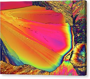 Light Micrograph Of Citric Acid Crystals Canvas Print