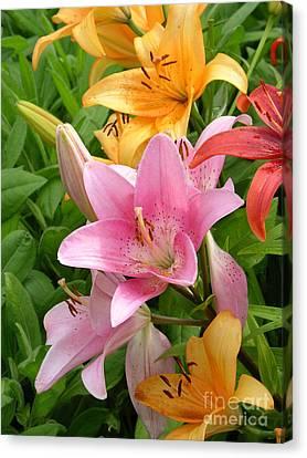Lilies Lilium Sp Canvas Print