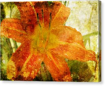 Lilly Canvas Print by Steven  Michael