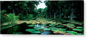 Mauritius Canvas Print - Lily Pads Floating On Water by Panoramic Images