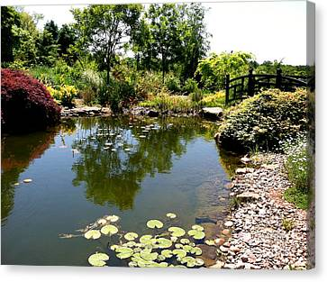 Lily Pond At Paxson Hill Canvas Print by Addie Hocynec