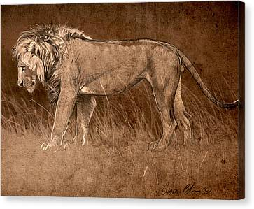 Canvas Print featuring the digital art Lion Sketch by Aaron Blaise