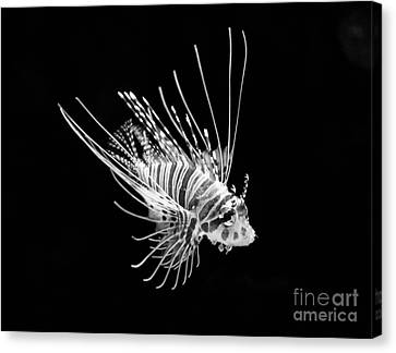 Little Lionfish Canvas Print by Jamie Pham