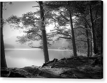 Rooted Canvas Print - Loch An Eilein by Dorit Fuhg
