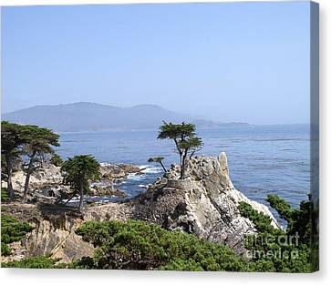 Canvas Print featuring the photograph Lone Cypress by Bev Conover
