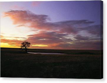 Lone Tree Pond Canvas Print
