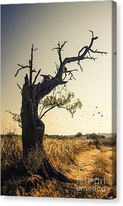 Lonely Tree Canvas Print by Carlos Caetano