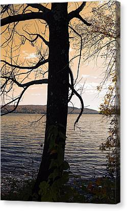 Graphic Digital Art Canvas Print - Lonely Tree   by Mark Ashkenazi