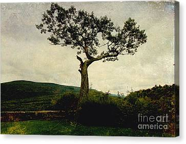 Canvas Print featuring the photograph Lonely Tree by Trina  Ansel