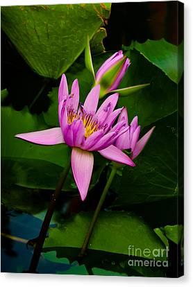 Lotus Canvas Print by Angela Wright