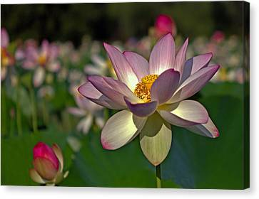 Canvas Print featuring the photograph Lotus Flower by Jerry Gammon