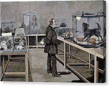 Louis Pasteur (1822-1895 Canvas Print by Prisma Archivo