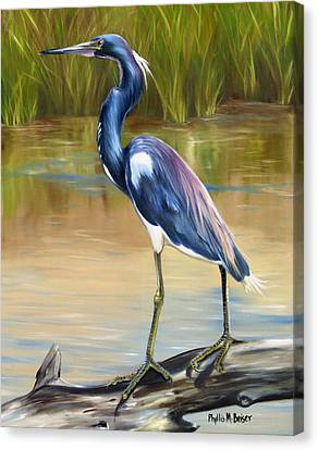 Louisiana Heron Canvas Print by Phyllis Beiser
