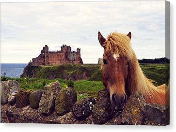 Curtain Wall Canvas Print - Lovely Horse And Tantallon Castle by RicardMN Photography