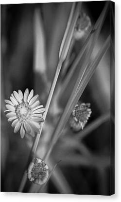 Canvas Print featuring the photograph Loxahatchee Flower by Bradley R Youngberg