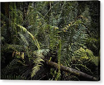 Loxahatchee Refuge-4 Canvas Print by Rudy Umans