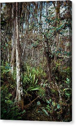 Loxahatchee Refuge Canvas Print by Rudy Umans