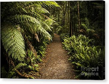 Lush Green Tasmanian Forest Trail In Strahan Canvas Print by Jorgo Photography - Wall Art Gallery