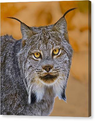 Canvas Print featuring the photograph Lynx by Steve Zimic