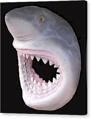 Mack The Shark Canvas Print by Dan Townsend