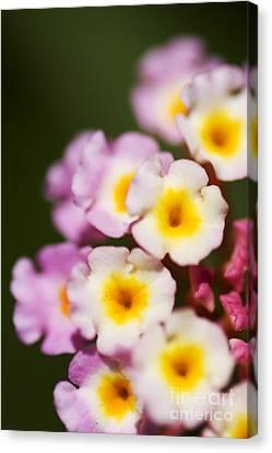 Macro Bloom Canvas Print