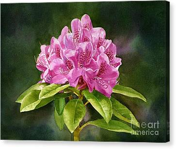 Dark Pink Canvas Print - Magenta Rhododendron With Background by Sharon Freeman