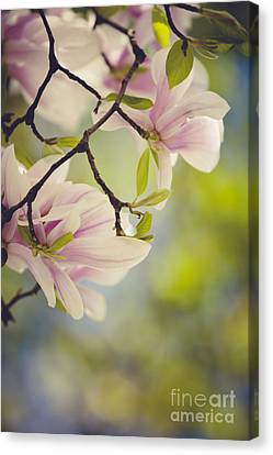 Display Canvas Print - Magnolia Flowers by Nailia Schwarz