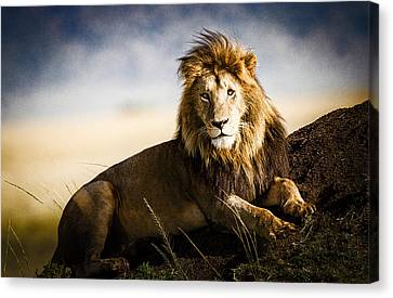 Majestic Male On Mound Canvas Print by Mike Gaudaur