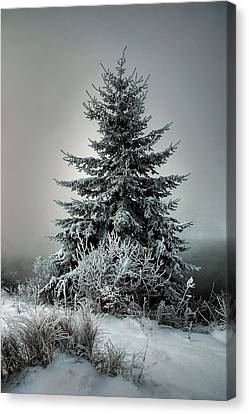 Majestic Winter Canvas Print by Heather  Rivet