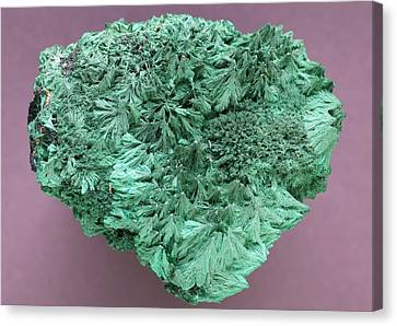 Malachite Mineral Canvas Print by Science Photo Library