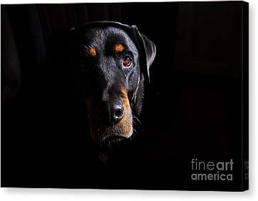 Mandy Canvas Print by Cindy Manero